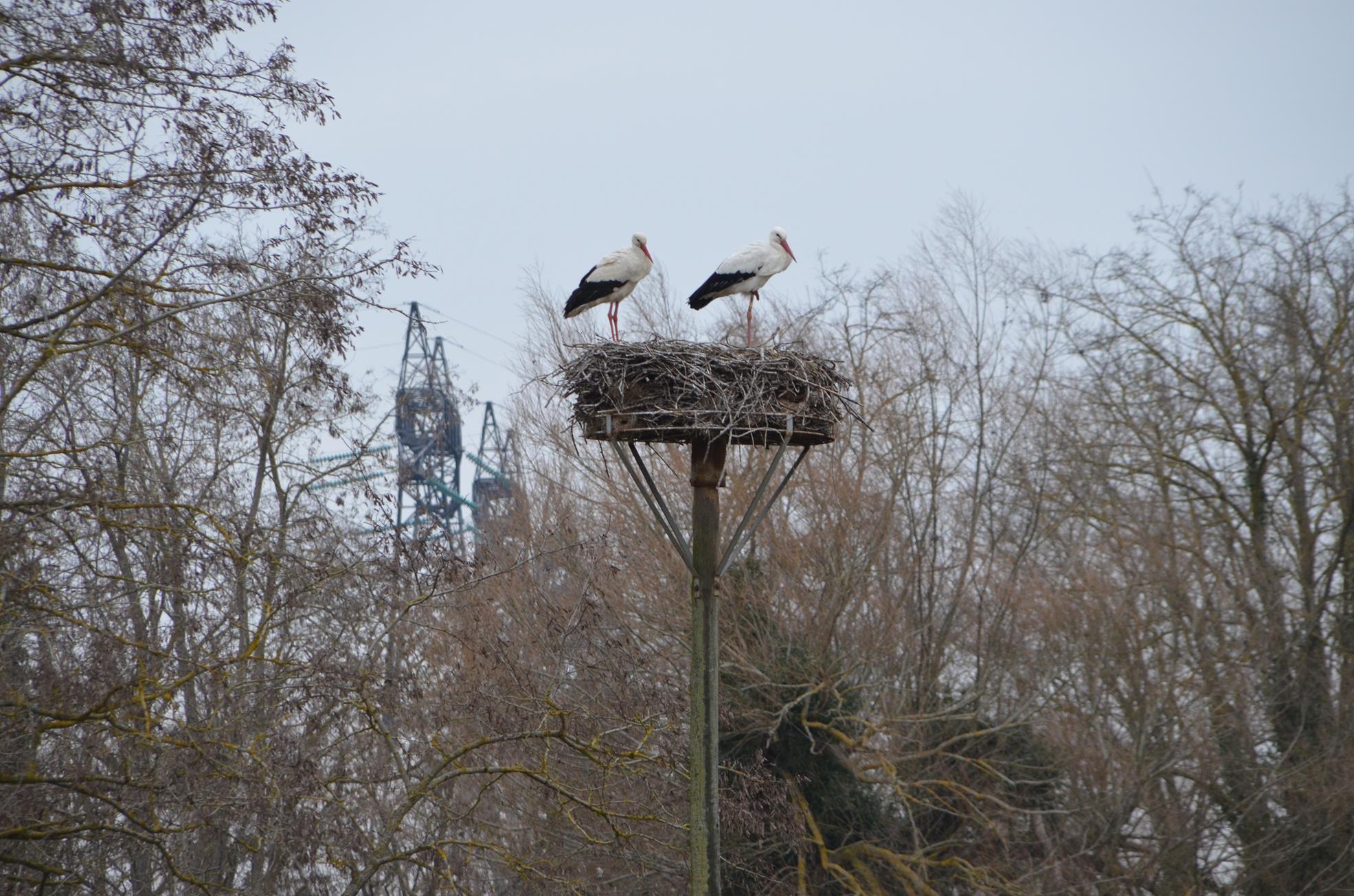 Les cigognes sont de retour la r serve ornithologique de for Site edf ejp observatoire